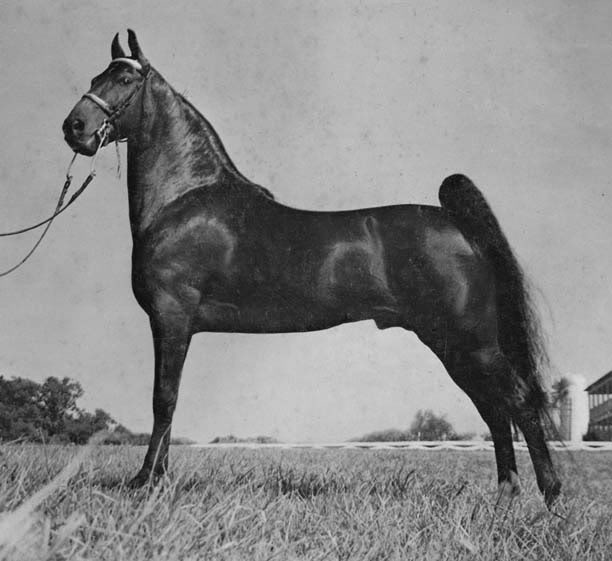 The BEST of Walking Horse Trivia! - Page 6 GoBoysRoyalHeir-1