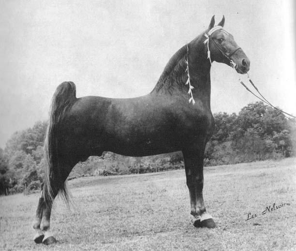 The BEST of Walking Horse Trivia! - Page 6 MackKsHandshaker