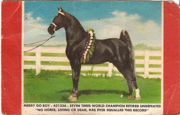 The BEST of Walking Horse Trivia! - Page 3 MerryGoBoyPostcard