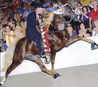 The BEST of Walking Horse Trivia! Nine