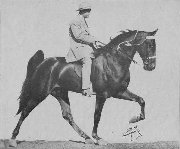 The BEST of Walking Horse Trivia! OldGlorysBigMan