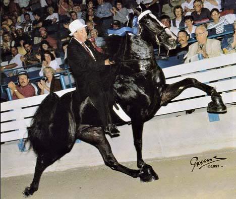 The BEST of Walking Horse Trivia! RPMBudDunn