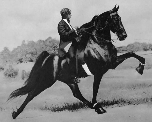 The BEST of Walking Horse Trivia! Shades