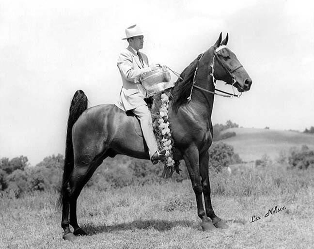 The BEST of Walking Horse Trivia! TalkOfTheTownSteveHill
