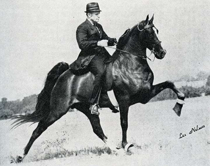 The BEST of Walking Horse Trivia! - Page 25 3M-1