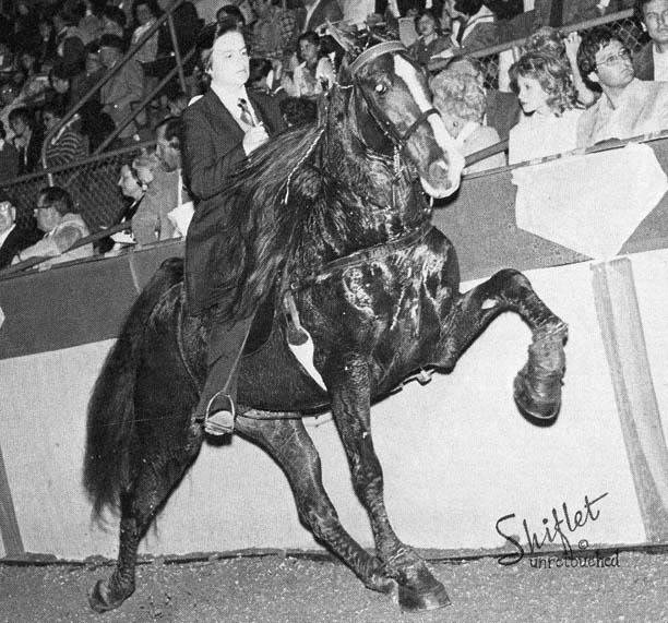 The BEST of Walking Horse Trivia! - Page 26 HandshakersCarbonSarahDunn