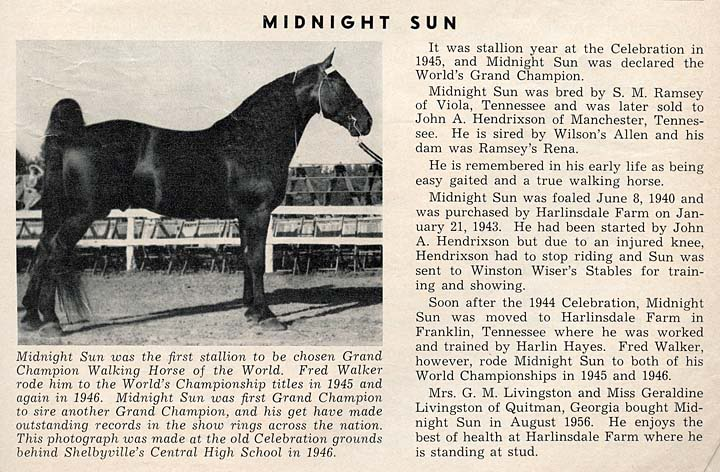 History Of The Tennessee Walking Horse - Page 3 MidnightSun