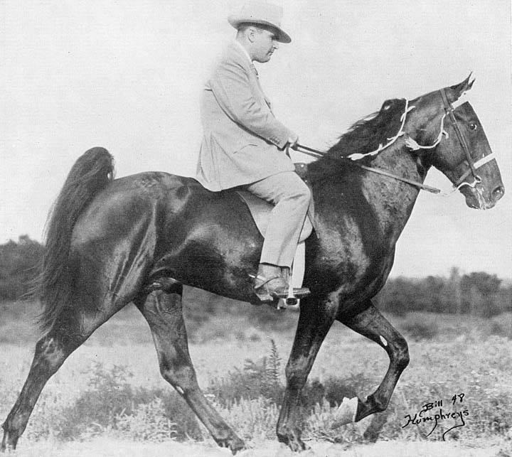 The BEST of Walking Horse Trivia! - Page 26 SkippersSonofMidnightBASkipper