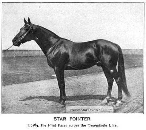 History Of The Tennessee Walking Horse - Page 7 StarPointer