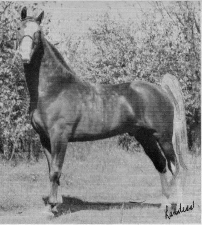 The BEST of Walking Horse Trivia! - Page 25 Awho5