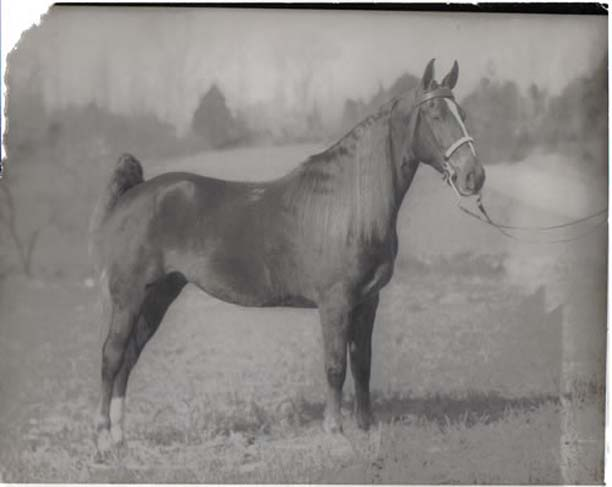 The BEST of Walking Horse Trivia! - Page 25 Horse_jpg