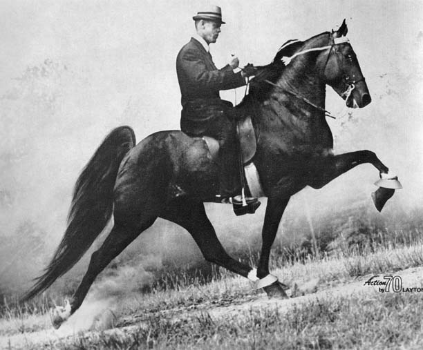The BEST of Walking Horse Trivia! - Page 5 Manofrhythm