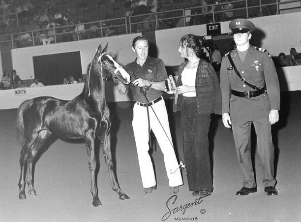 The BEST of Walking Horse Trivia! - Page 5 Puremagic