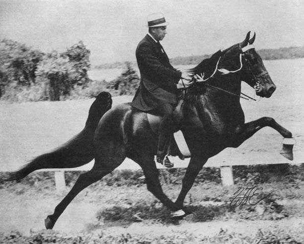 The BEST of Walking Horse Trivia! - Page 5 Sundust