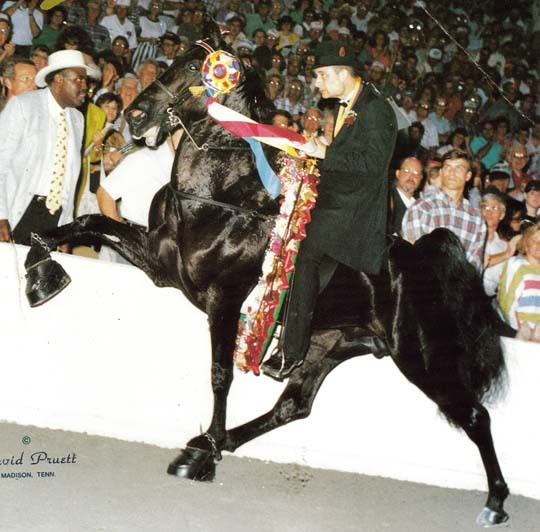The BEST of Walking Horse Trivia! TheTouch