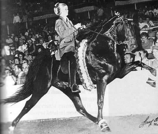 The BEST of Walking Horse Trivia! Blackmagicwoman