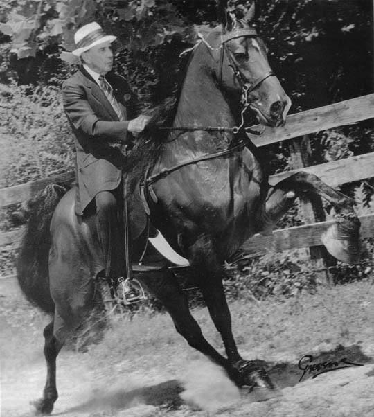 The BEST of Walking Horse Trivia! Budrebel