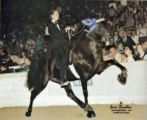 The BEST of Walking Horse Trivia! - Page 5 Copysnighttrain