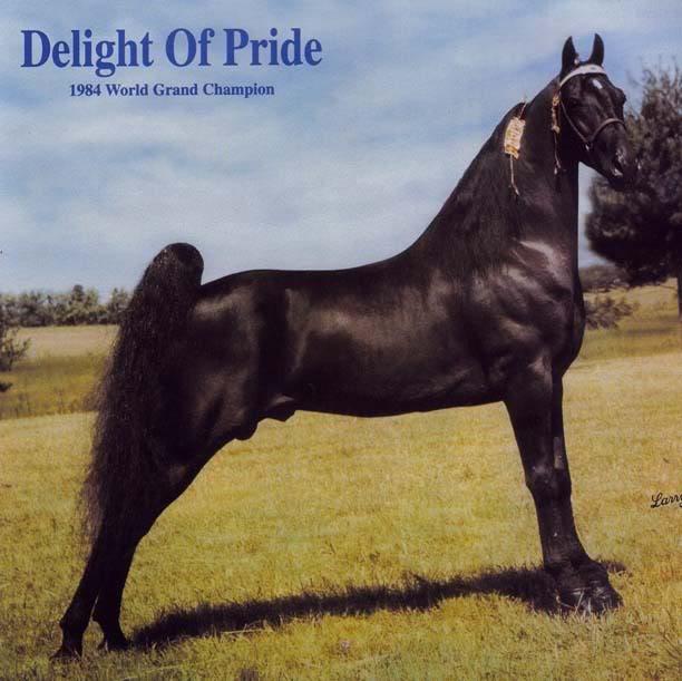 The BEST of Walking Horse Trivia! - Page 6 Delightofpride-3