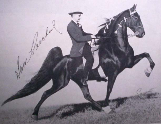 The BEST of Walking Horse Trivia! - Page 4 Ebmasterpiece