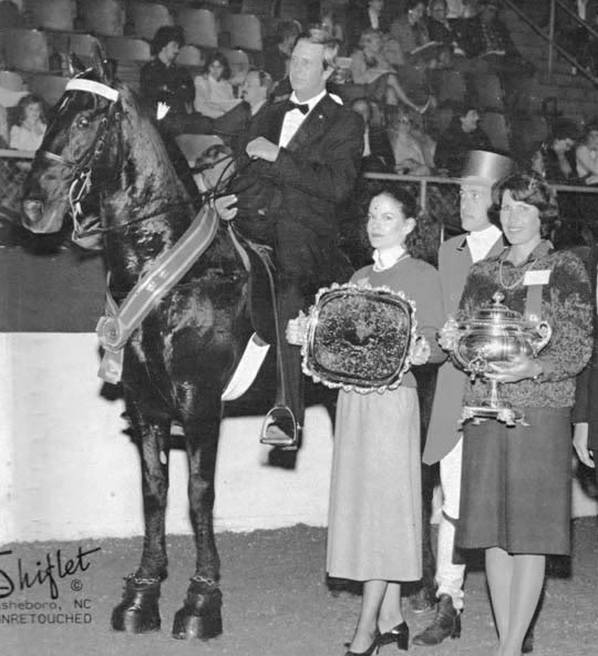 The BEST of Walking Horse Trivia! - Page 4 Ebonyscollector