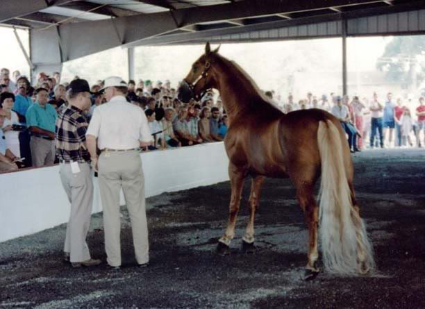 The BEST of Walking Horse Trivia! - Page 6 Generator