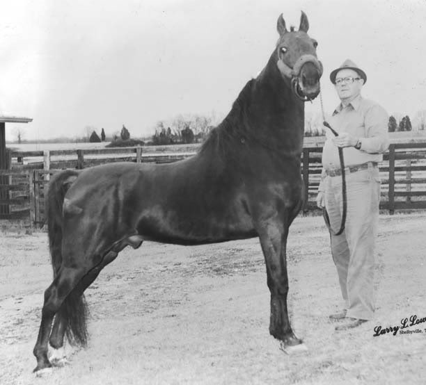 The BEST of Walking Horse Trivia! - Page 6 Goboyschatterbox