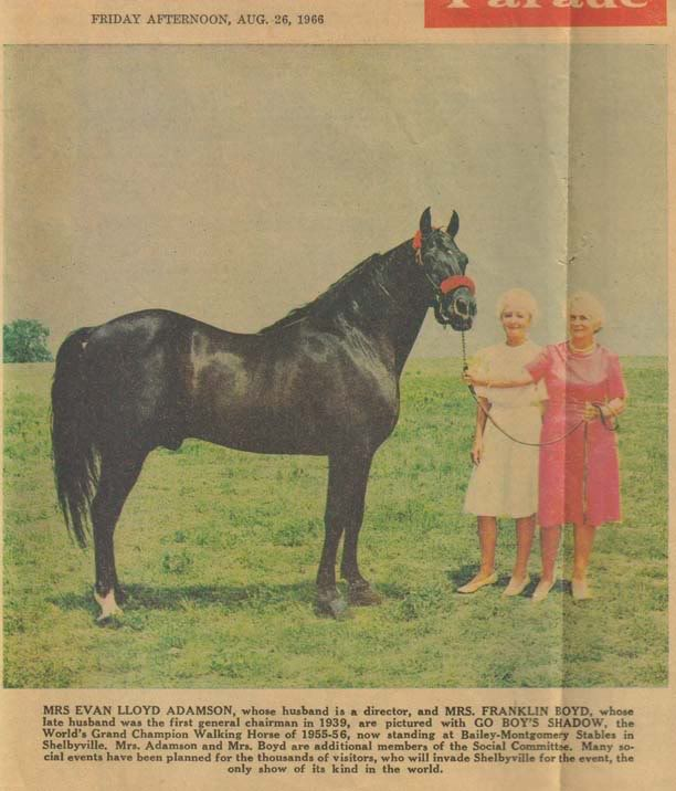 The BEST of Walking Horse Trivia! - Page 6 Goboysshadow