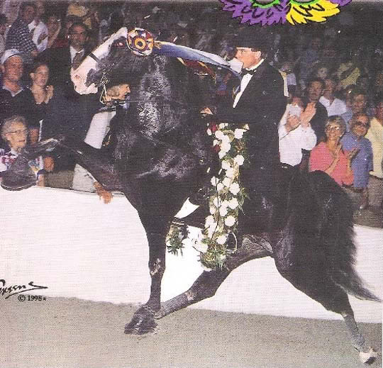 The BEST of Walking Horse Trivia! Masquerading