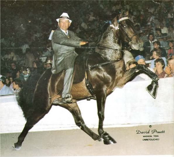 The BEST of Walking Horse Trivia! - Page 5 Matterofpride-1