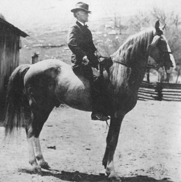 The BEST of Walking Horse Trivia! - Page 5 Roanallenf-38