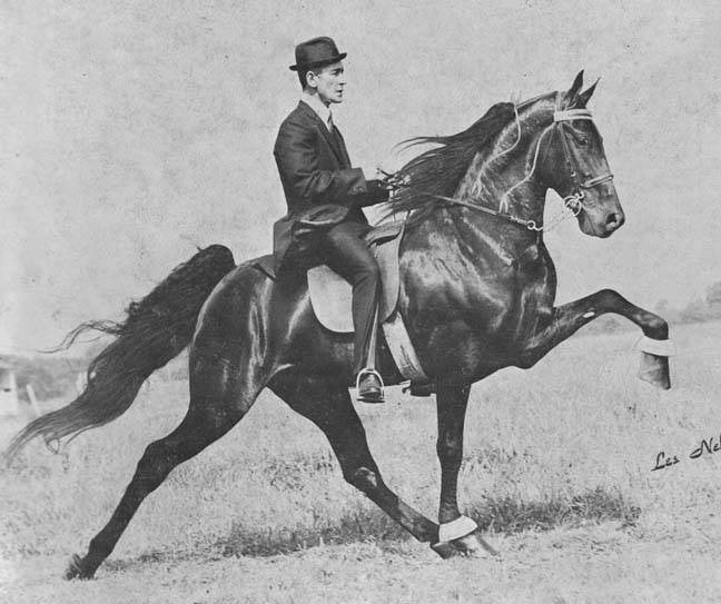 The BEST of Walking Horse Trivia! Senator-1