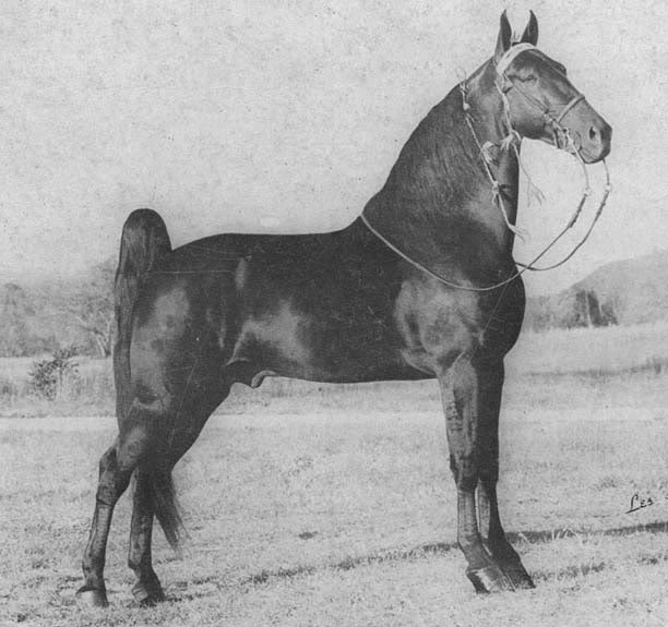 The BEST of Walking Horse Trivia! - Page 6 Shakersshocker