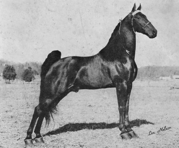 The BEST of Walking Horse Trivia! - Page 6 Triplethreat-1