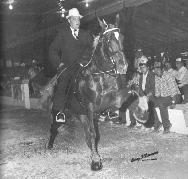 The BEST of Walking Horse Trivia! - Page 2 Whiteywhitehead
