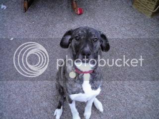 Who's got pets? DCFC0003