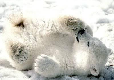 Animals - Page 2 Knut_polarbear_01