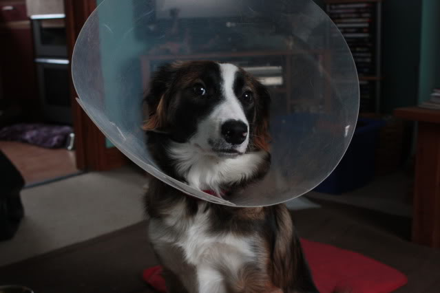 Space pup IMG_4750