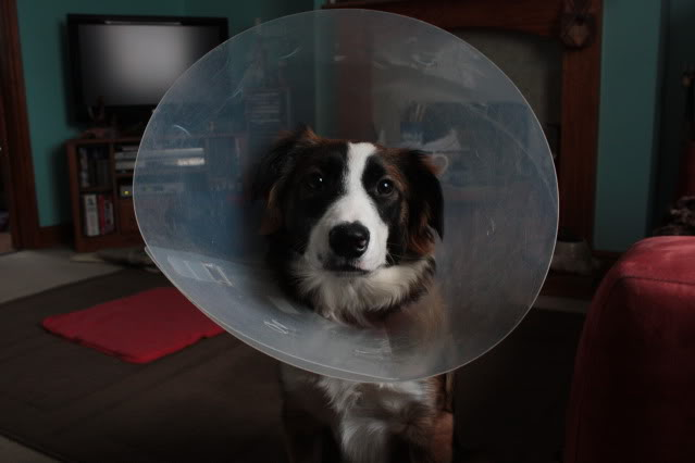 Space pup IMG_4755