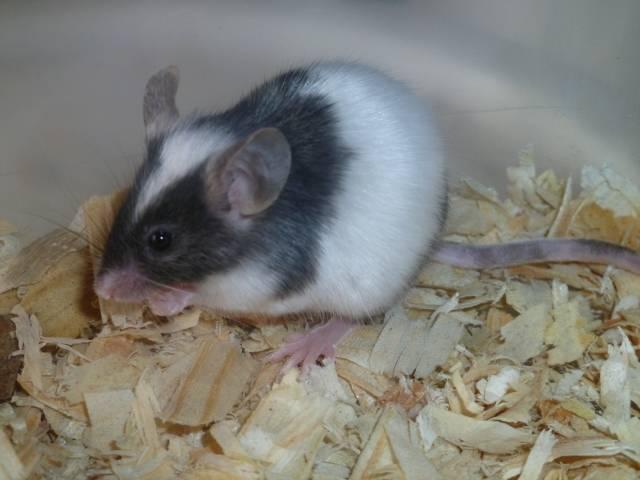 New Mice Pics  Picture009