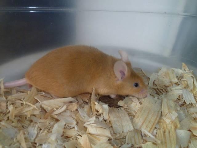 New Mice Pics  Picture013