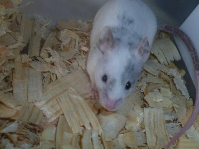 New Mice Pics  Picture014