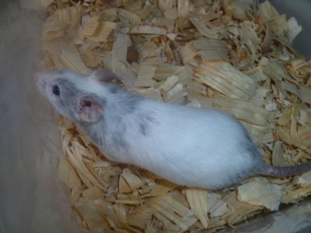 New Mice Pics  Picture015