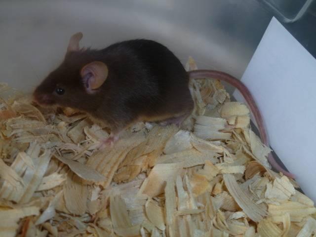 New Mice Pics  Picture017