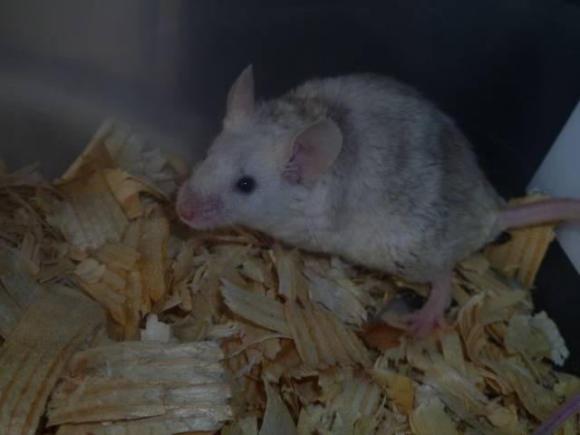 New Mice Pics  Picture018