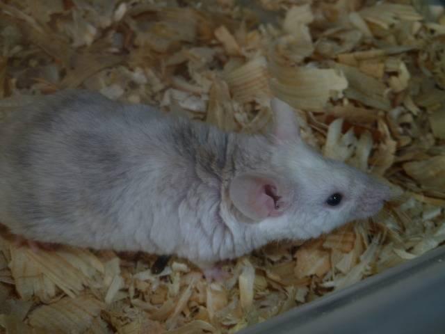 New Mice Pics  Picture019