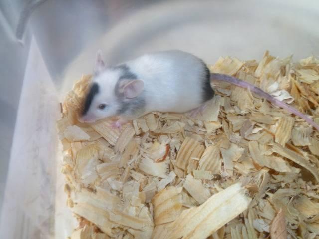 New Mice Pics  Picture022