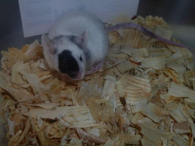 New Mice Pics  Picture023