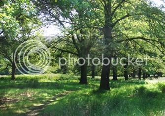 Ambientación Richmondpark01