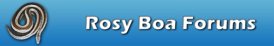 Rosy Boa Forums
